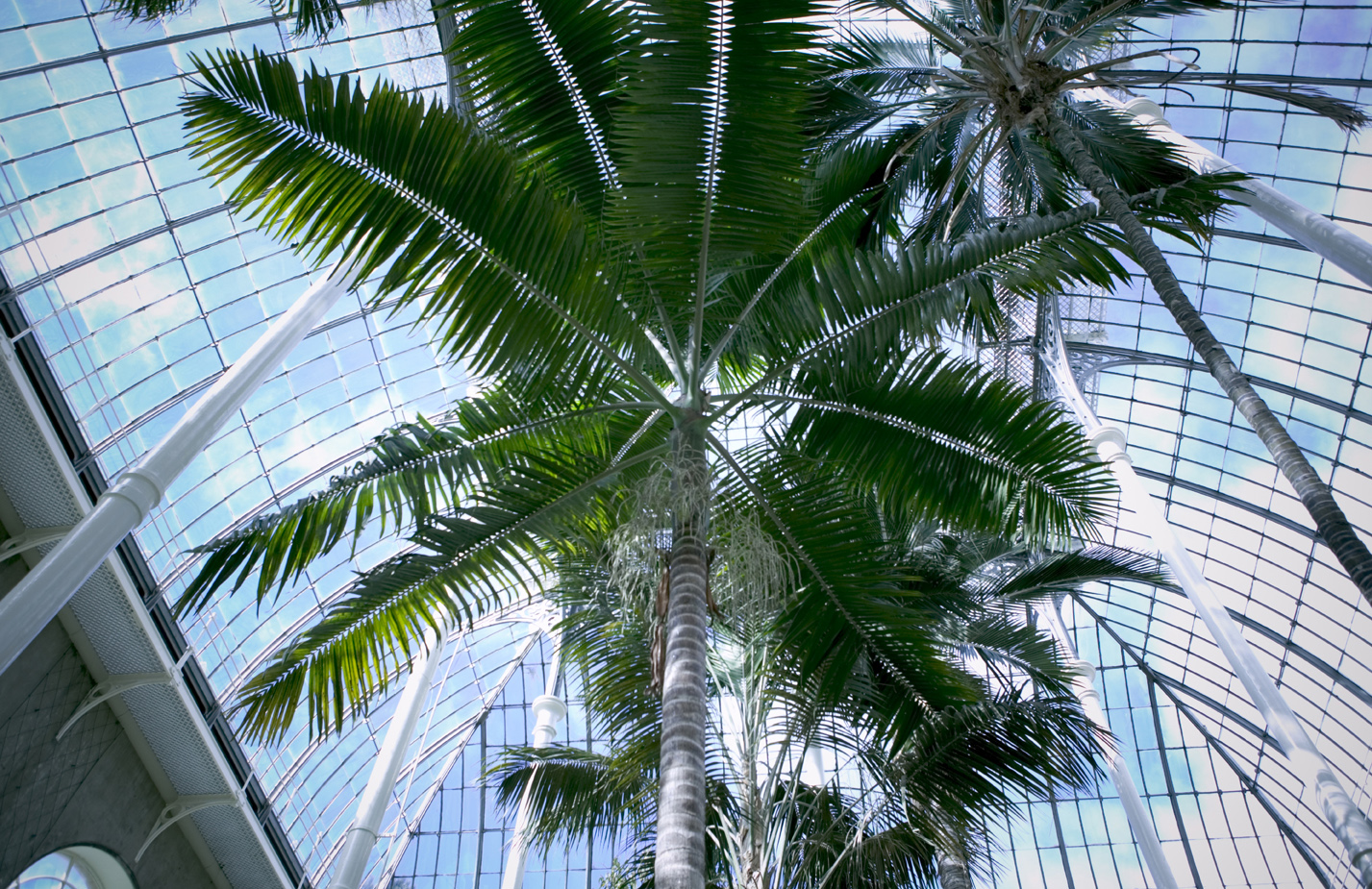 Palm tree in the Royal Botanic Gardens in Edinburgh